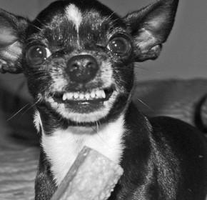 aggressivedog1-640x400