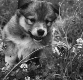 puppy1-640x400